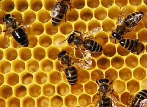 Пчелопродукты