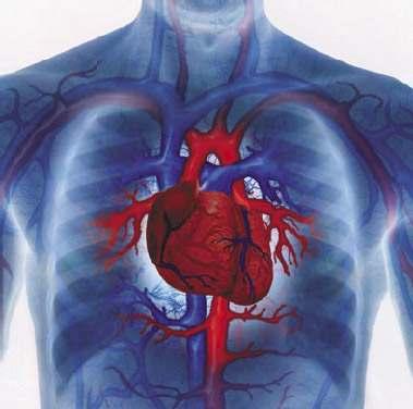 Очищение сердечной мышцы