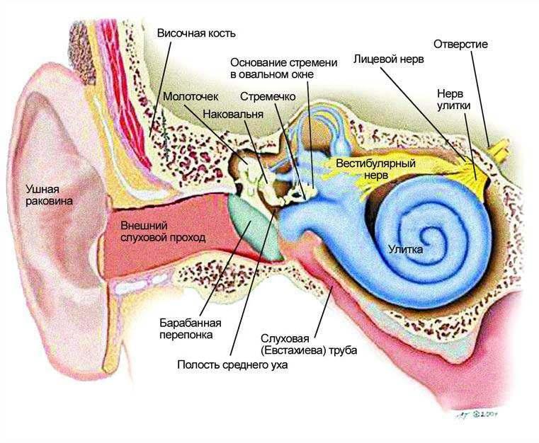 Очищение для слуха